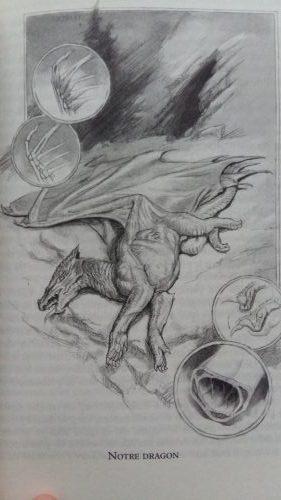 Croquis de dragon fait par Lady Trent